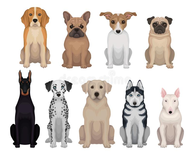 Detailed flat vector set of dogs of different breeds. Domestic animals. Design for poster of animal clinic, kennel club. Colorful set of dogs of different breeds vector illustration