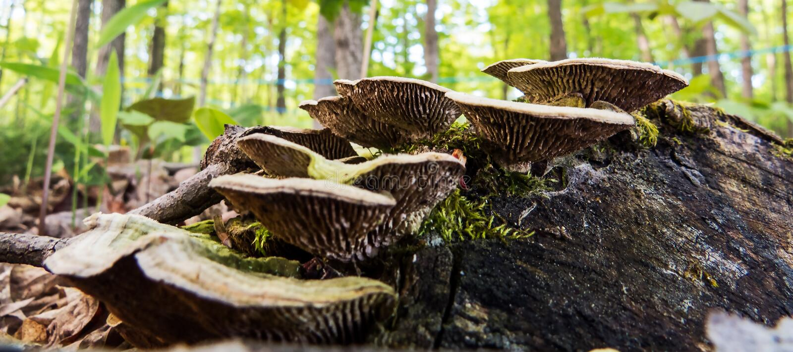 Detailed forest mushrooms on an old piece of wood royalty free stock image