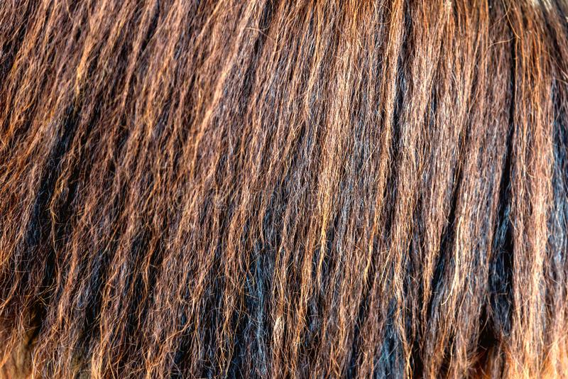 Detailed horse hair or horse mane - texture. Background stock image