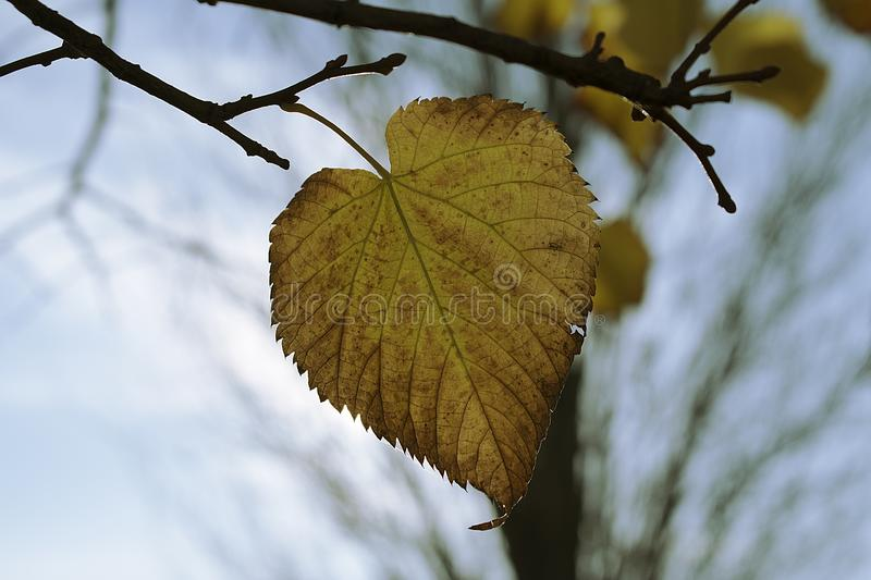 Detailed leave in autumn stock image