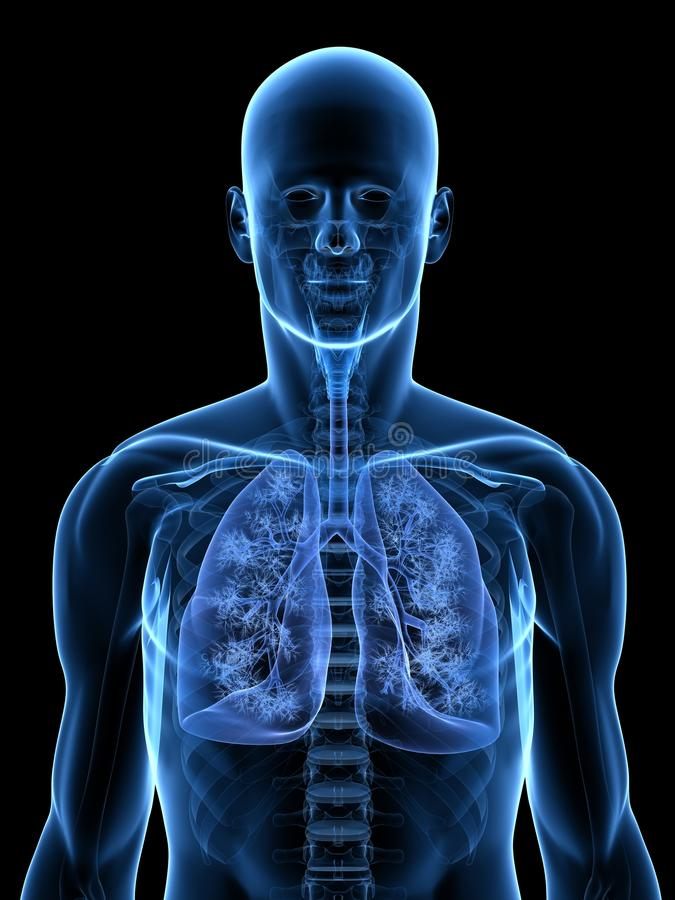 Detailed Lung Royalty Free Stock Photography