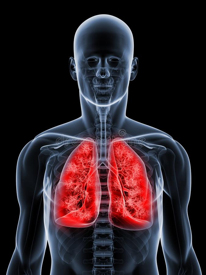 Download Detailed Lung Stock Photography - Image: 14139622