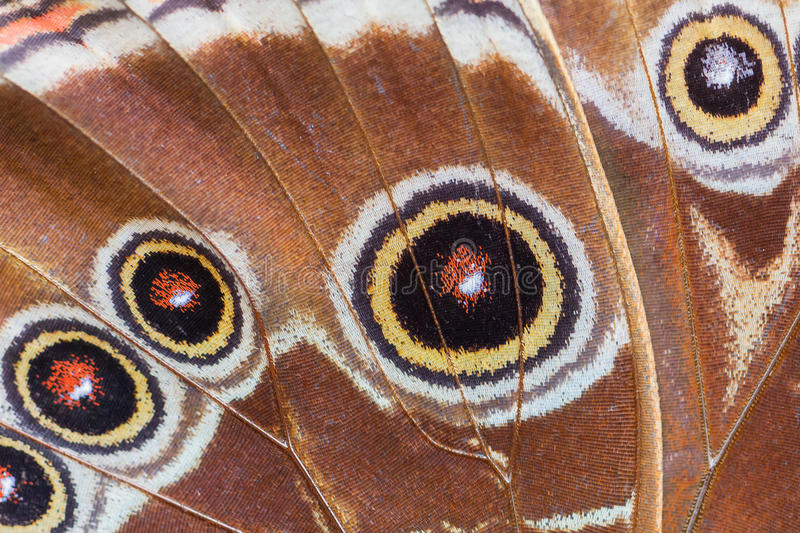 Detailed macro of tropical butterfly wing royalty free stock photos