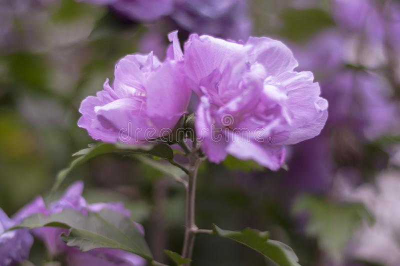 Detailed macro of wild flower in nature in pink or purple colors royalty free stock photo