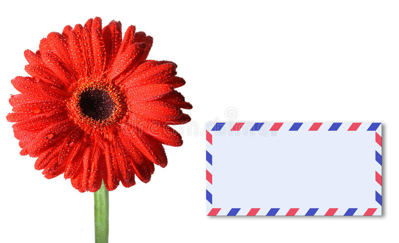 A detailed photo of a Gerbera and postcard stock images