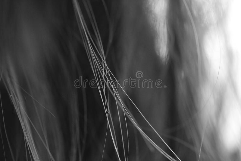 Hair in black&white, crossing each other in symmetric way. Detailed photography of my hair connecting in amazing way. Photo is B&W for better contrast royalty free stock photo