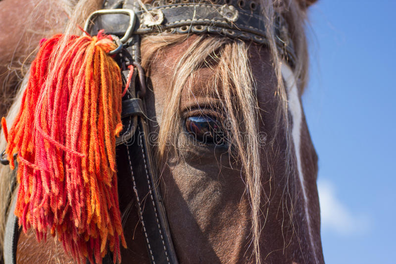Detailed portrait of a horse with chestnut hair. Close-up detailed portrait of a horse with chestnut hair mane with blue sky as background royalty free stock photo
