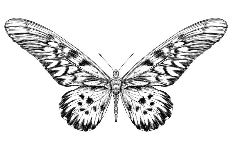 detailed realistic sketch of a butterfly stock vector