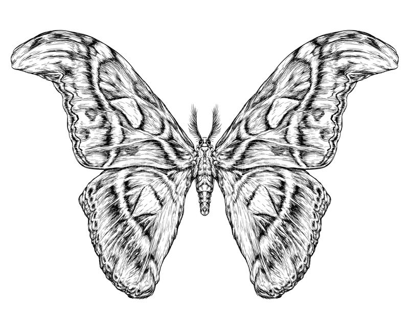Detailed realistic sketch of a butterfly / moth. Vector illustration on white stock illustration