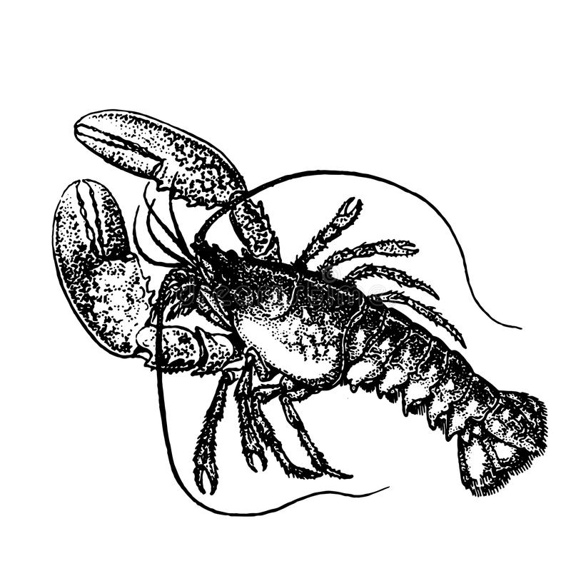 Detailed sketch tattoo lobster vector illustration