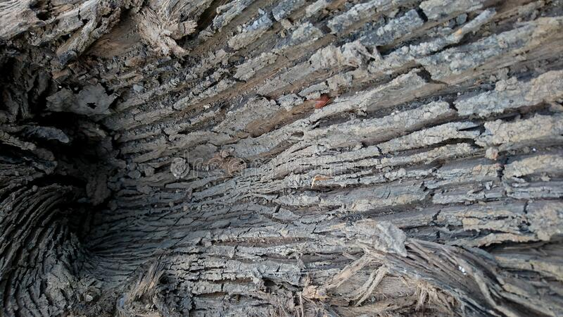 Detailed texture of fallen tree bark, rough surface and curvature stock photos