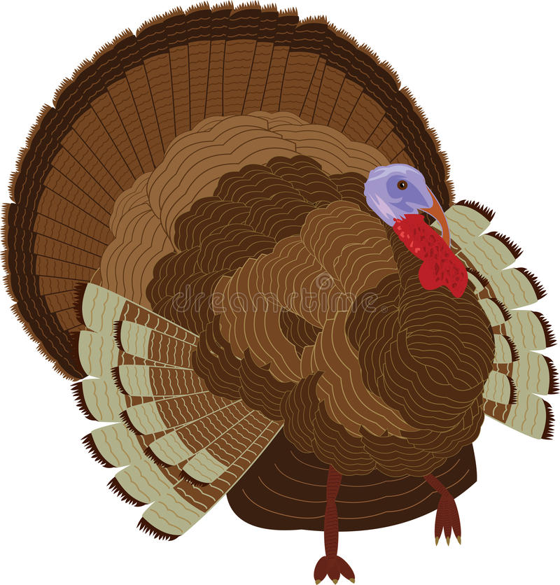 Detailed turkey : Thanksgiving stock illustration