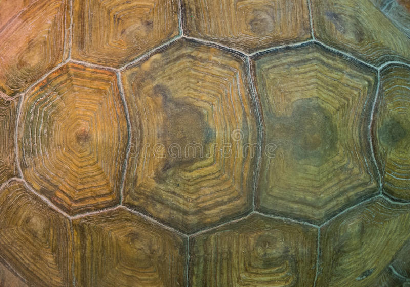 Detailed turtle shell pattern. Detailed old big turtle shell pattern royalty free stock images