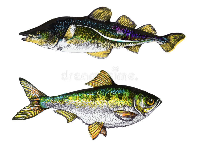 Detailed two fishes hand drawn illustration. Detailed two fishes ink hand drawn illustration vector illustration