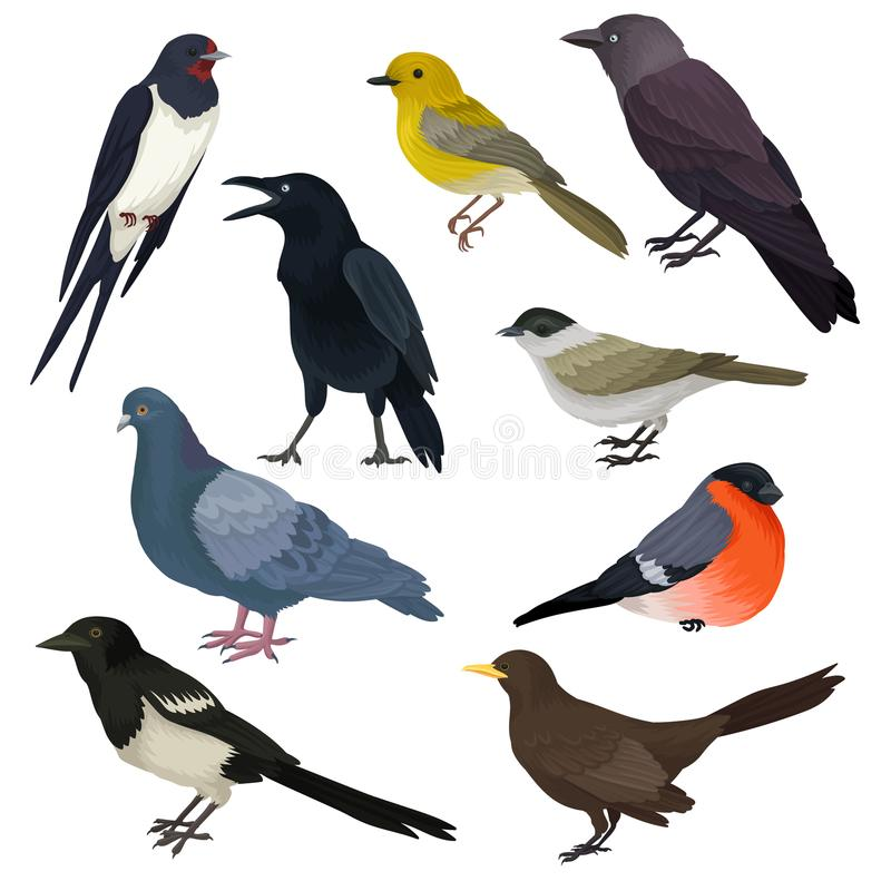 Detailed vector icons of different species of birds. Wildlife or fauna theme. Elements for ornithology book, print or stock illustration