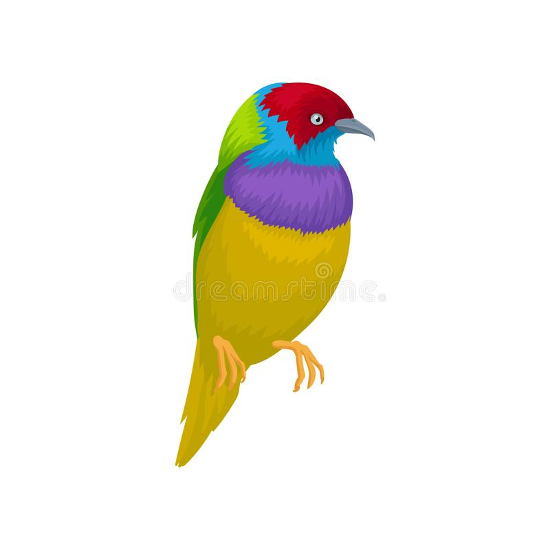 Detailed vector portrait of gouldian finch. Exotic bird with bright-colored feathers and little beak. Wildlife and fauna. Detailed portrait of gouldian finch royalty free illustration