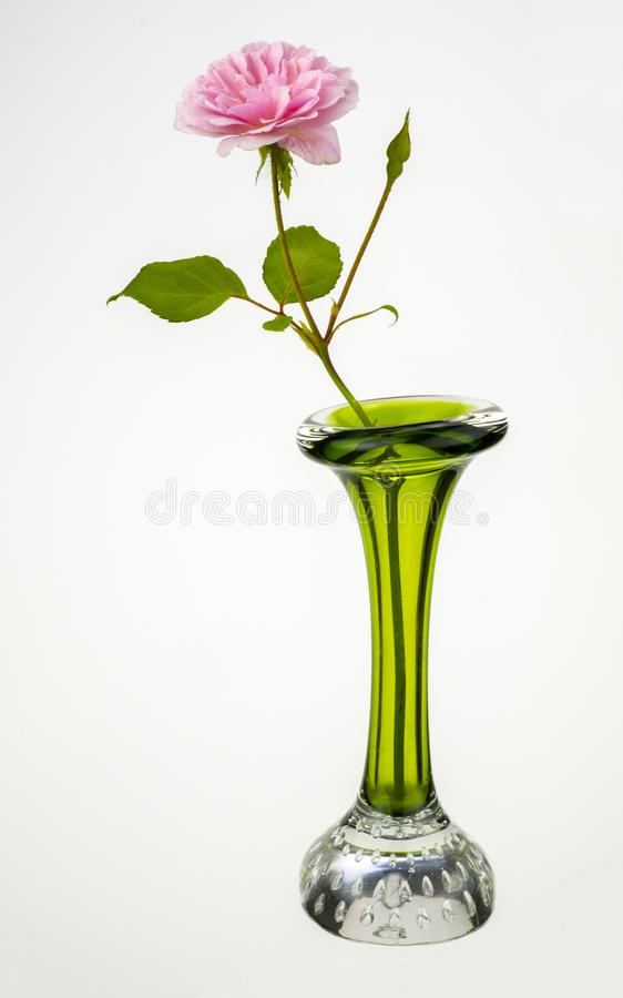 Green vase and pink rose. Detailed view of a green vase and pink rose on a plain background royalty free stock image