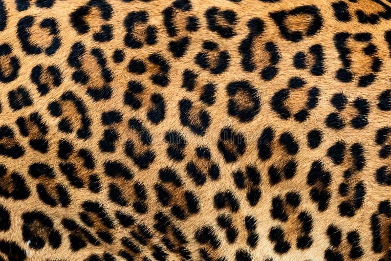 Detailhuid van luipaard royalty-vrije stock afbeelding