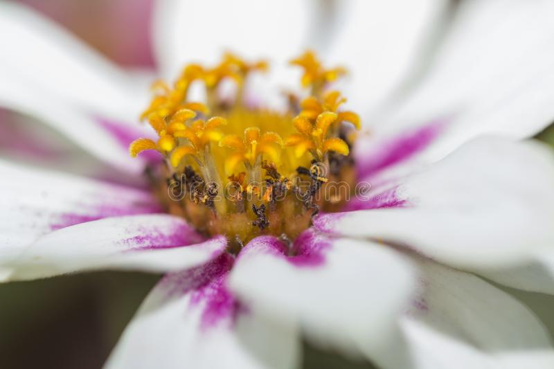 The Center of a Flower. The details of a center of a flower royalty free stock photos
