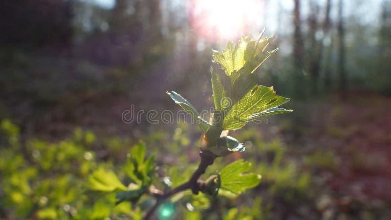Details in der Natur lizenzfreie stockfotografie