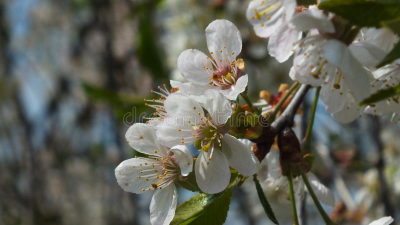Details in der Natur lizenzfreies stockbild