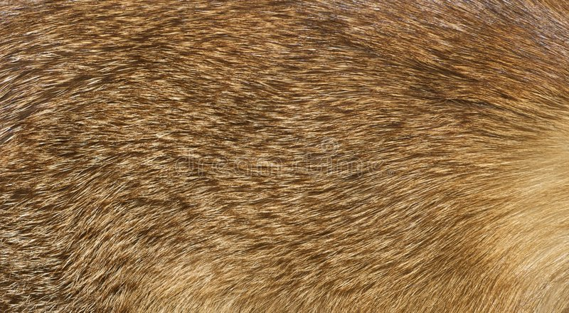 Download Details of fox fur stock photo. Image of closeup, textured - 8581202