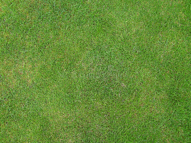 Download Details of green grass stock photo. Image of fields, football - 26020
