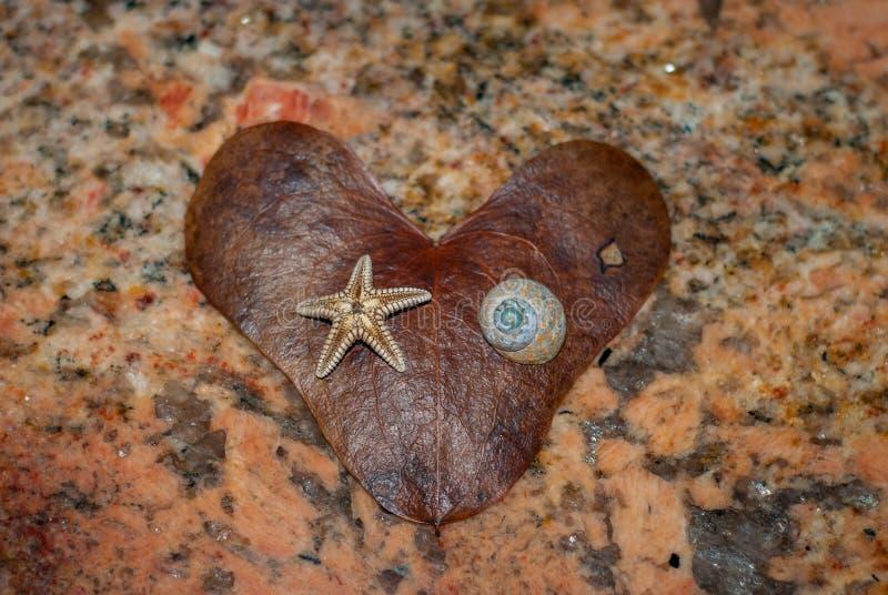 Details of heart shaped brown leaf stock image
