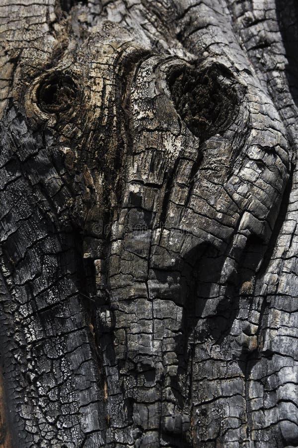 Details met gevormde oppervlaktetextuur van gebrand hout royalty-vrije stock fotografie