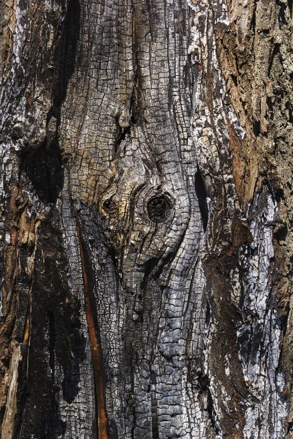 Details met gevormde oppervlaktetextuur van gebrand hout stock afbeeldingen