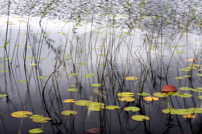 Download Details of pond in autumn stock image. Image of lake, environment - 6387433