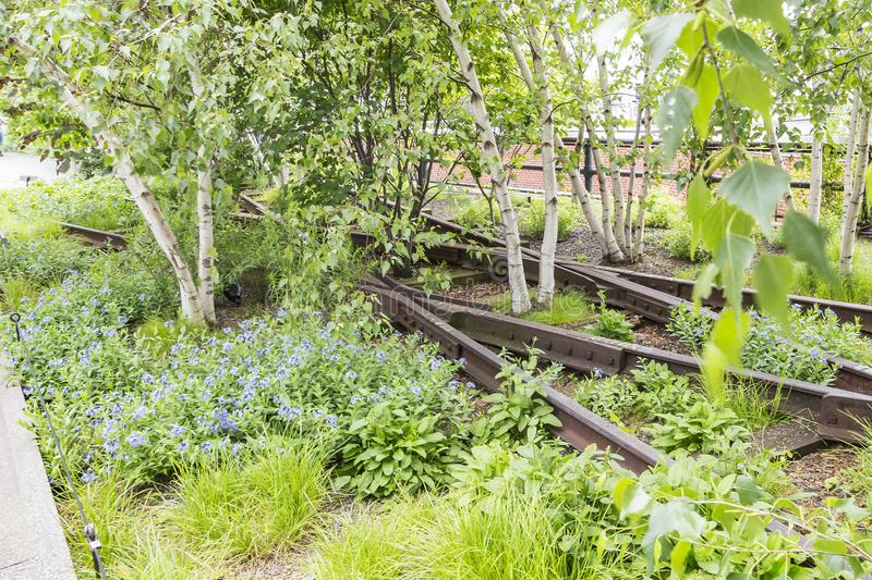Details of the rails with birch trees in High Line Park, New York, USA 2 stock photography