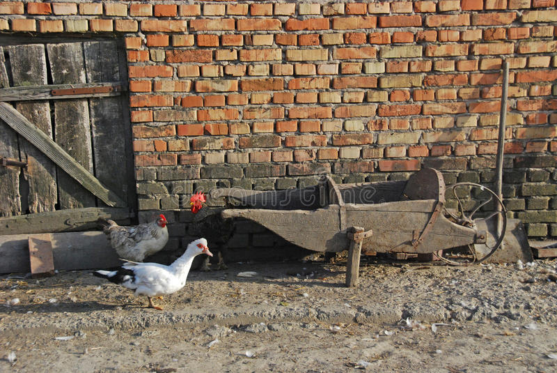 The details of rural yard with old wooden carts and animals stock photography