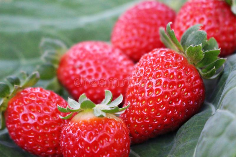 Details of a strawberry stock photography
