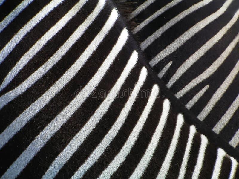 Details van zebra royalty-vrije stock afbeelding