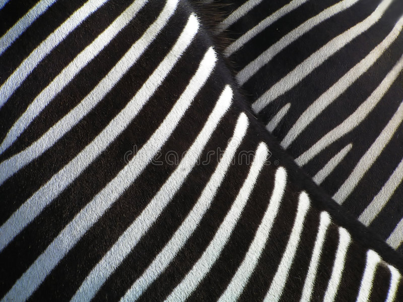 Details of zebra royalty free stock image