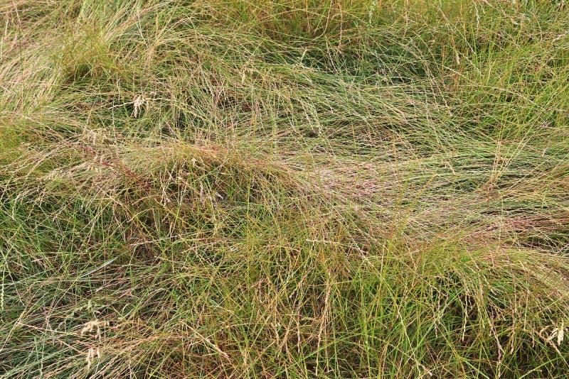 Detalhado perto acima da vista em superfícies da grama verde imagem de stock