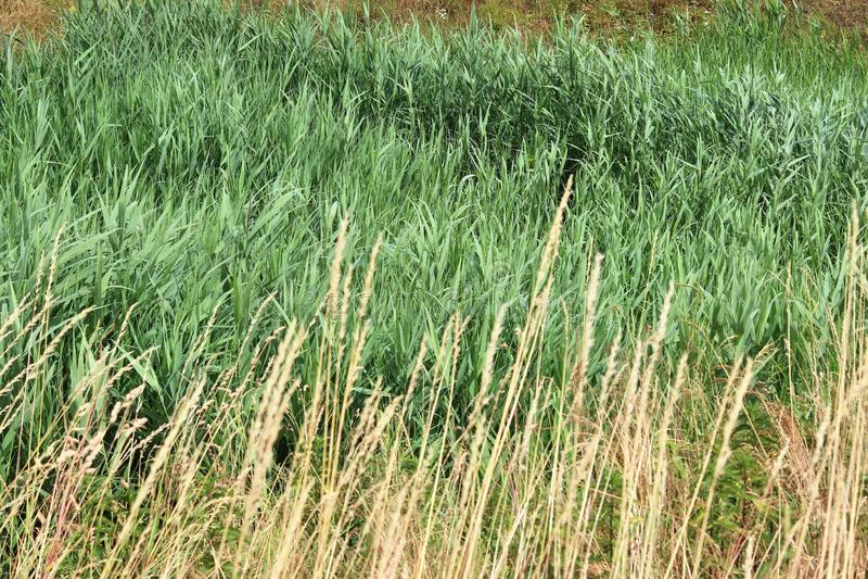 Detalhado perto acima da vista em superfícies da grama verde imagem de stock royalty free
