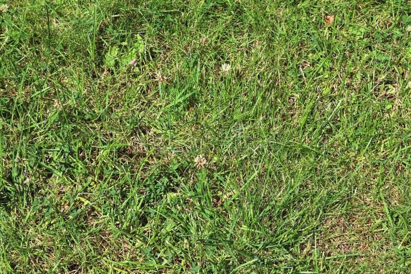 Detalhado perto acima da vista em superfícies da grama verde imagens de stock royalty free