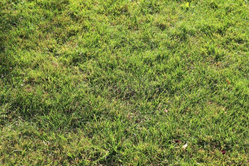 Detalhado perto acima da vista em superfícies da grama verde foto de stock