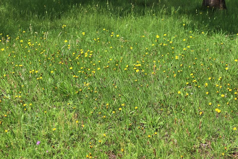 Detalhado perto acima da vista em superfícies da grama verde foto de stock royalty free