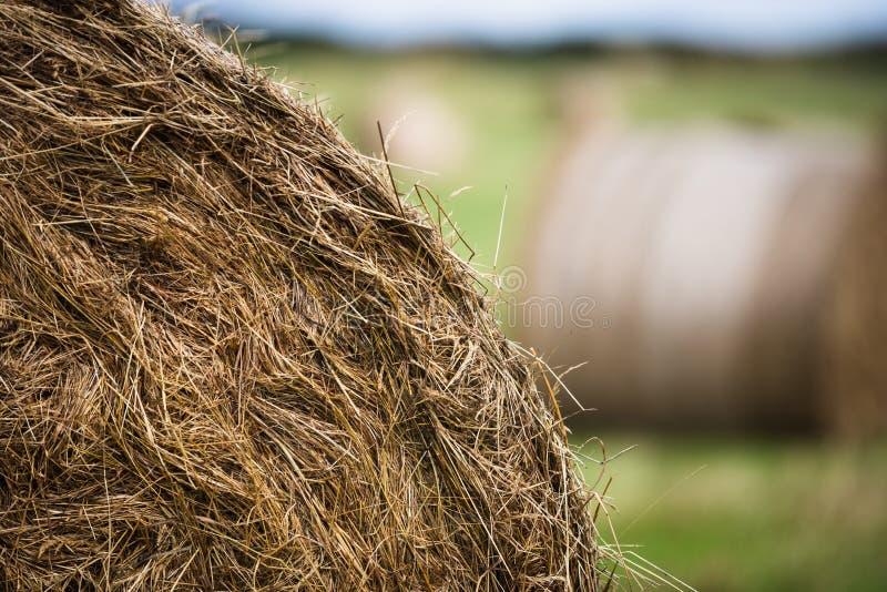 Detalhe ascendente próximo de um rolo do pacote de feno em um campo rural imagens de stock