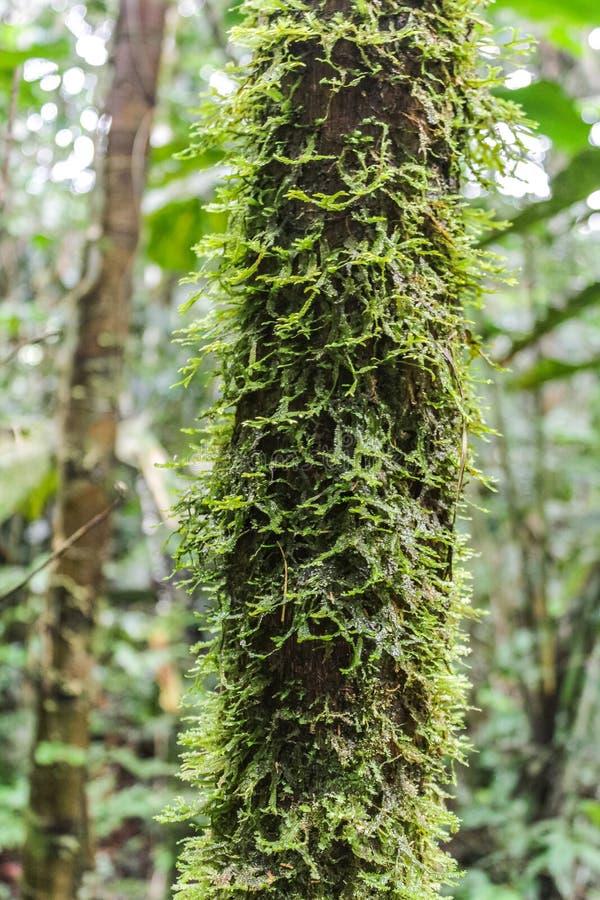 Detalhe bonito de tronco de árvore com musgo imagens de stock