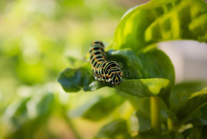 Detalhe colorido de Swallowtail imagem de stock