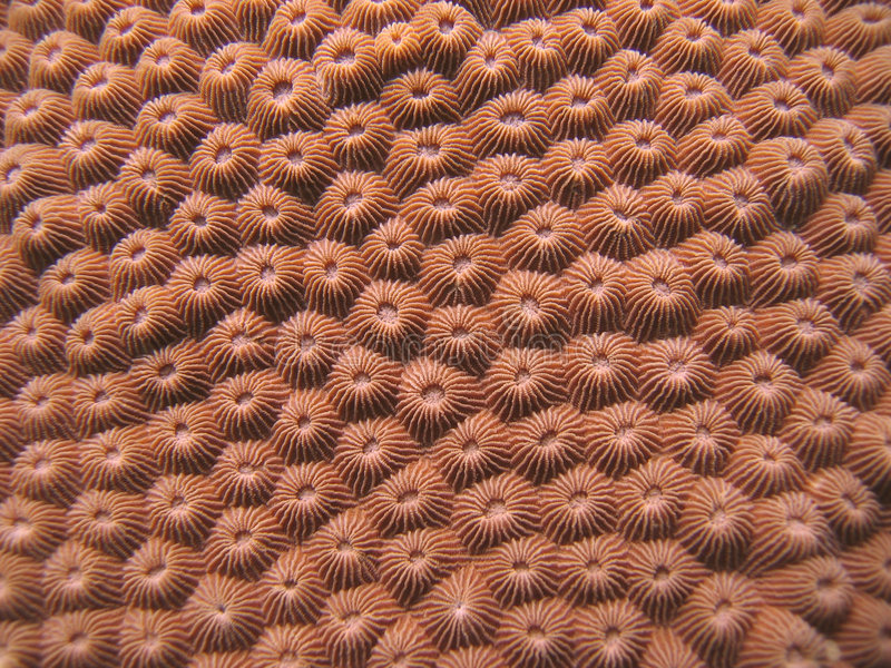 Detalhe - coral duro imagem de stock