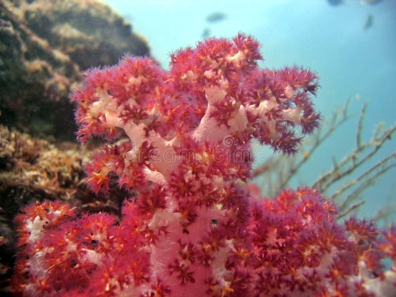 Detalhe - coral macio fotografia de stock
