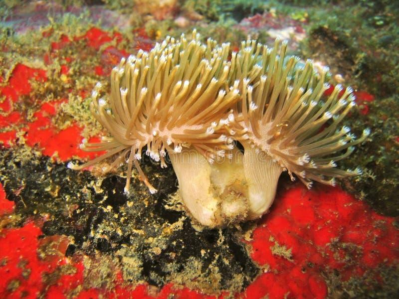 Detalhe coral macio da flor imagens de stock