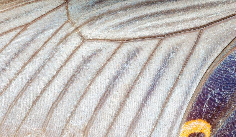 Detalhe da asa da borboleta imagem de stock royalty free