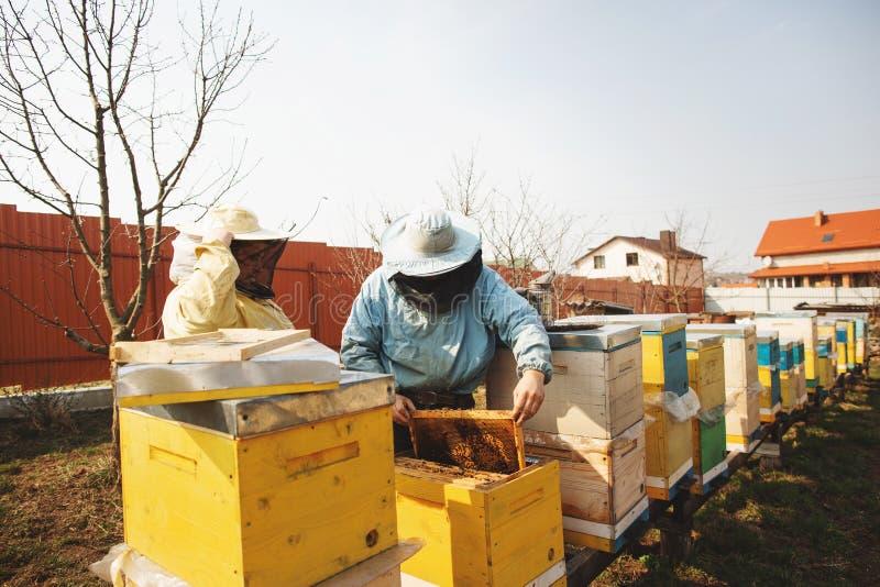 Detalhe da colmeia da abelha Apicultor Inspecting Bee Hive ap?s o inverno fotografia de stock royalty free