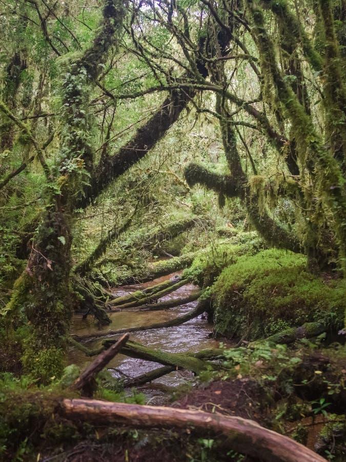 Detalhe da floresta encantado no carretera austral, encantado o Chile de Bosque imagens de stock
